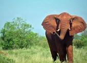 Kinh hoàng voi vườn thú giẫm chết nữ du khách