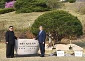 Clip: Ông Kim cùng ông Moon trồng cây tại biên giới 2 miền