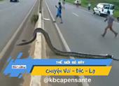 Video: Trăn khủng bò ngang đường, thiên hạ náo loạn