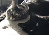 Chi 35 triệu đồng mỗi tháng thuê nhà cho mèo 'ra riêng'