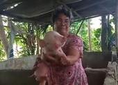 Kì lạ chú lợn sinh ra với 2 đầu, 2 mõm, 3 mắt