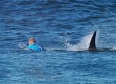 Tin thêm về nhà vô địch lướt sóng chiến đấu với cá mập