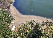 Nước thải đem ngòm kèm váng dầu tuồn ra sông Hàn