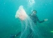 Biển Cù Lao Chàm tuyệt đẹp dưới ống kính du khách
