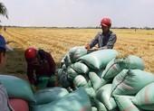 'Cấm xuất khẩu gạo, thiệt hại đầu tiên là người dân'