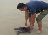 Chủ nhà hàng mua được rùa quý đem thả về đại dương