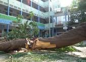 Hiện trường vụ cây phượng bật gốc khiến 1 học sinh tử vong