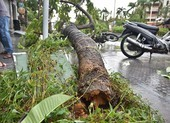 1 người chết, 29 người bị thương do bão số 5