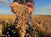 Thủ tướng yêu cầu Bộ Công Thương báo cáo vấn đề xuất khẩu gạo