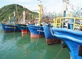 Báo cáo Thủ tướng vụ không bán bảo hiểm cho tàu cá đóng mới