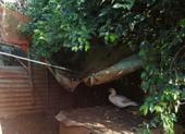 Cô gái 15 tuổi chết thương tâm vì dây điện giăng ở chuồng vịt