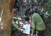 Tháo gỡ hàng ngàn bẫy thú ở rừng Sơn Trà