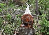 Tạm đình chỉ công tác phó ban quản lý để rừng phòng hộ bị phá