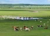 Dịch hạch ở Trung Quốc: Đóng cửa các điểm tham quan ở Nội Mông
