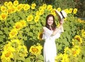 Giới trẻ rầm rộ check in vườn hoa mặt trời giữa lòng phố núi