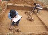'Đánh thức' cụm di tích Bãi Cọi, trưng bày tại Hà Nội