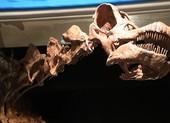 Phát hiện hóa thạch khủng long 140 triệu năm, dài 20 m