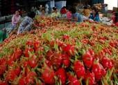 Dân Trung Quốc không dám đi chợ, thanh long Việt lao đao