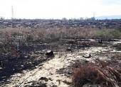 Tạm dừng dự án điện gió để mất 140 ha rừng phòng hộ