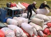 Diễn biến mới nhất về vụ đăng ký xuất khẩu gạo lúc nửa đêm