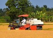 Hỏa tốc đề nghị hải quan cho xuất khẩu gạo nếp kịp thời