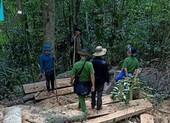 Kiểm tra hiện trường vụ phá rừng ở Gia Lai