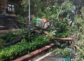 Bão số 6 suy yếu nhưng làm 77.000 hộ ở Phú Yên bị mất điện