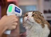 Nguy cơ con người truyền virus SARS-CoV-2 cho chó mèo cao hơn là ngược lại