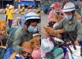 Pháp lý vụ Cà Mau tiêu hủy 15 chú chó theo chủ về quê