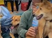 Chủ tịch huyện trực tiếp làm rõ vụ 15 con chó bị tiêu hủy ở Cà Mau