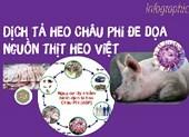 Dịch tả heo Châu Phi đe dọa nguồn thịt heo Việt