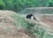 Chết thảm vì mê 'tự sướng' với gấu hoang dã
