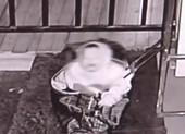 Bé 3 tuổi bị cha nhốt vào túi du lịch rồi bỏ rơi