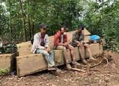 Bắt nhóm người khai thác gỗ trái phép