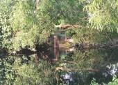 Bình Tân: Người đàn ông chết trong tư thế treo cổ ở lùm cây