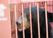 Cứu hộ bốn cá thể gấu ngựa tại Nha Trang