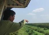 Cảnh báo cháy cấp V hơn 3.000 ha rừng tràm ở Cà Mau