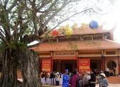Cây bồ đề gần 200 năm tuổi ở Phú Yên trở thành cây di sản Việt Nam