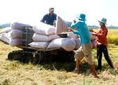 Lúa bội thu, đề nghị cho xuất khẩu gạo trở lại