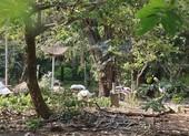 Chuyện ly kỳ ở Thảo Cầm Viên: Nỗi buồn của con vạc lẻ bầy