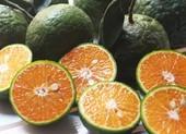 Bất ngờ với lợi ích của hạt cam