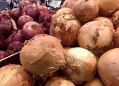 8 thực phẩm giúp hỗ trợ đường ruột khỏe mạnh