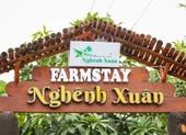 Trải nghiệm xứ dừa tại Nghênh Xuân Farmstay