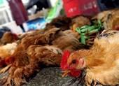 Trung Quốc: Một phụ nữ chết do nhiễm cúm gia cầm H5N6