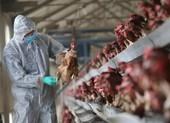 Trung Quốc liên tiếp phát hiện 2 ổ dịch cúm A/H5N6