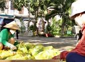 TP.HCM: Xóm Công viên Hạnh Phúc gác việc nhà, giúp người khó ngặt