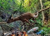 TBT tạp chí Sông Hương bác thông tin nướng động vật hoang dã