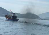 Thuyền câu mực va chạm với tàu cá làm 1 người chết, 1 mất tích