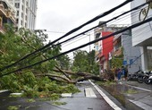 Thừa Thiên - Huế cây đổ hàng loạt, có người bị thương