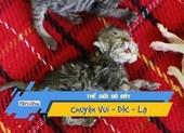 Kỳ lạ mèo hai đầu vẫn sống bình thường
